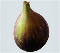 Black Genoa Fig